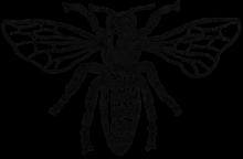 Image of a Bee - Organic skincare range